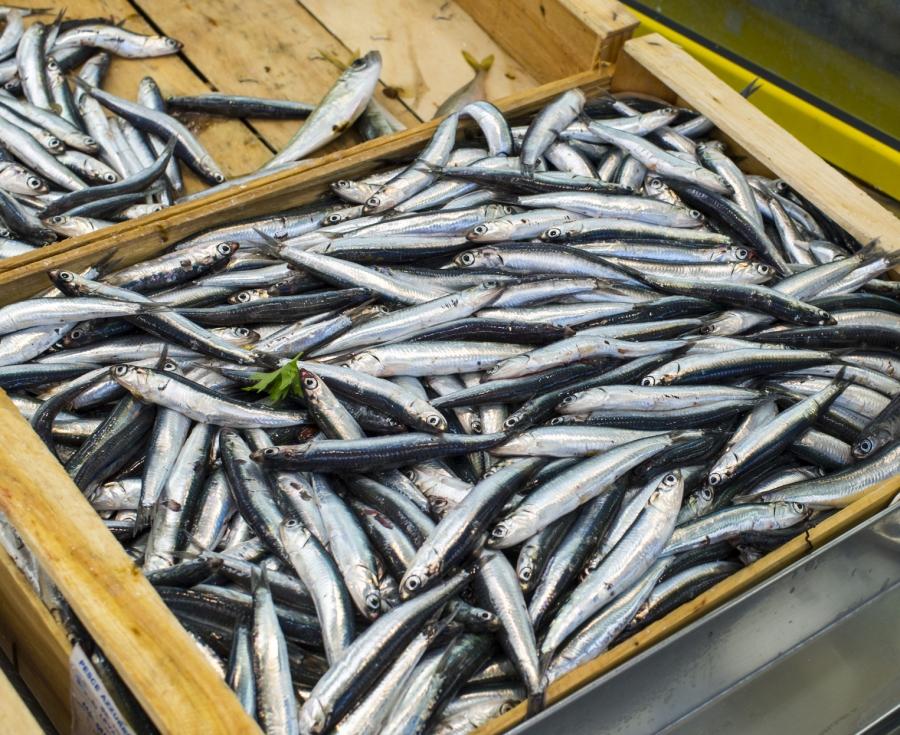 Intossicazione da istamina da consumo di alcune specie ittiche.